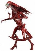 Vetřelci Akční figurka Genocide Red Queen